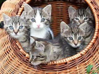 Собирать пазл Упаковка котят онлайн