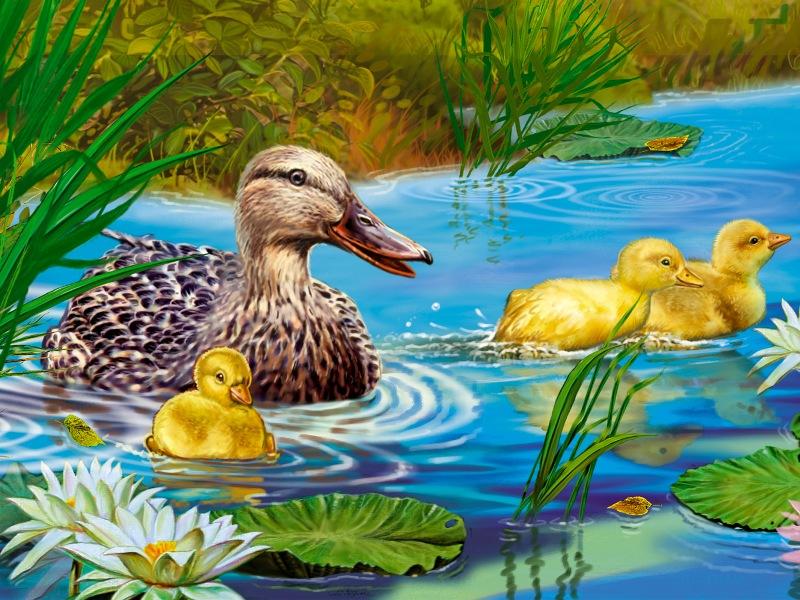 коллекция рисунок утка с утятами идут к озеру меня пропали все