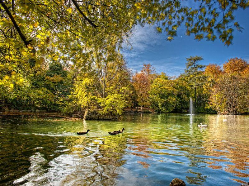 Пазл Собирать пазлы онлайн - Утки на озере