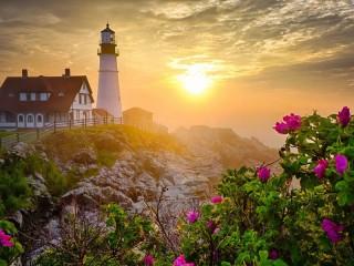 Собирать пазл Утро розы маяк онлайн