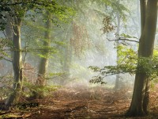 Собирать пазл Утро в лесу онлайн