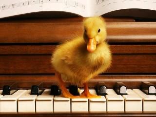 Собирать пазл Утёнок на пианино онлайн