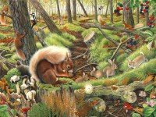 Собирать пазл В лесу онлайн