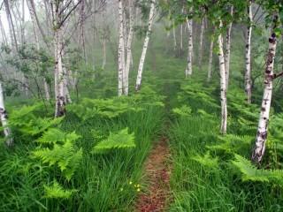 Собирать пазл В туманном лесу онлайн