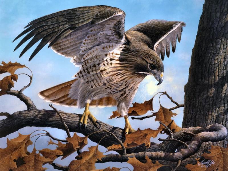 Пазл Собирать пазлы онлайн - Важная птица