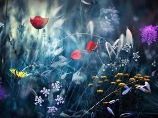 Собирать пазл Вечерние цветы онлайн