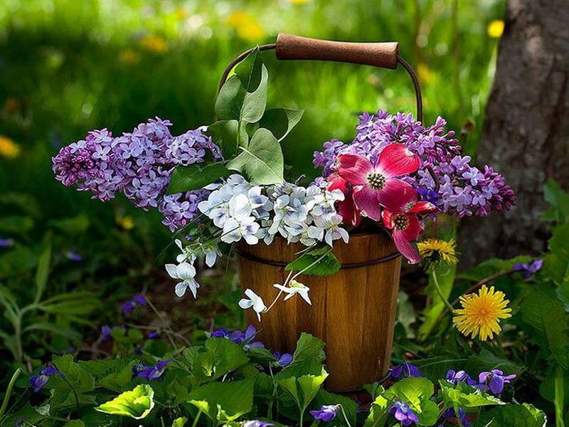 Пазл Собирать пазлы онлайн - Ведро с цветами