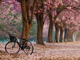 Собирать пазл Велосипед в аллее онлайн