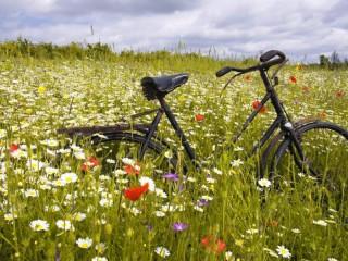 Собирать пазл Велосипед в поле онлайн