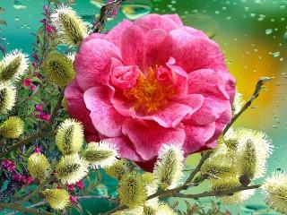 Собирать пазл Верба и роза онлайн