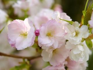 Собирать пазл Весенний цвет онлайн
