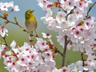 Собирать пазл Весна пришла онлайн