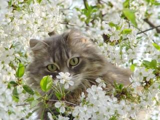 Собирать пазл Весна онлайн
