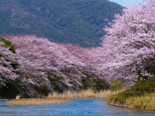 Собирать пазл Весна в Японии онлайн