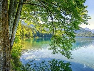 Собирать пазл Ветви над водой онлайн
