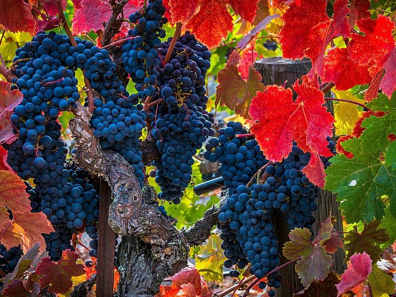 того, красивые картинки виноградной лозы домов коттеджей кургане