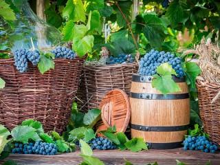 Собирать пазл Виноградный урожай онлайн