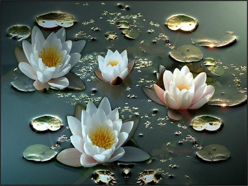 Пазл Собирать пазлы онлайн - Водные лилии