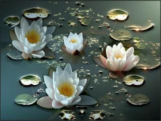 Собирать пазл Водные лилии онлайн