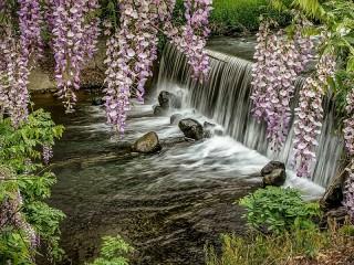 Собирать пазл Водопад и глициния онлайн