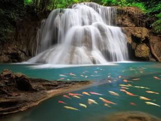 Собирать пазл Водопад с рыбками онлайн