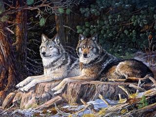 Собирать пазл Волки на отдыхе онлайн