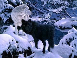 Собирать пазл Волки зимой онлайн