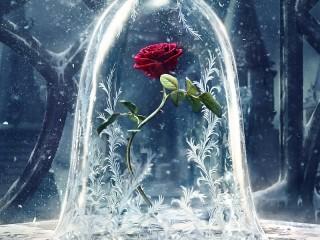 Собирать пазл Волшебная роза онлайн
