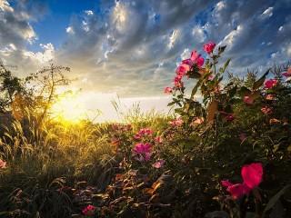Собирать пазл Восход нового дня онлайн