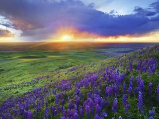 Собирать пазл Восход солнца онлайн