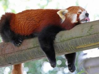 Собирать пазл Я сплю онлайн