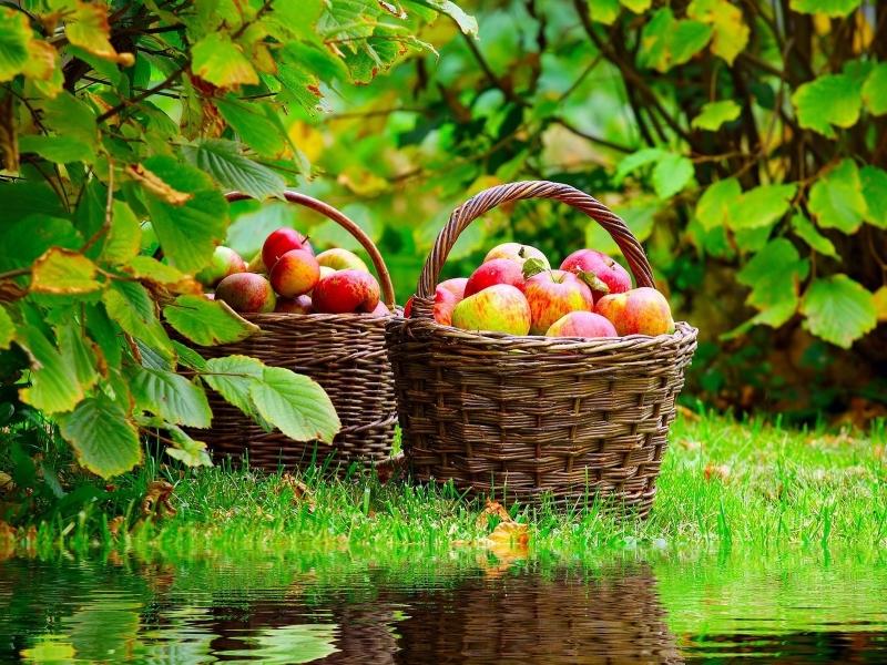 Пазл Собирать пазлы онлайн - Корзины яблок