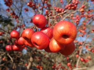 Собирать пазл Яблочки 1 онлайн
