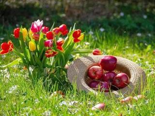 Собирать пазл Яблоки и тюльпаны онлайн