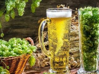 Собирать пазл Ячмень Хмель Пиво онлайн