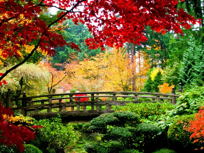 Пазл Собирать пазлы онлайн - Японская осень