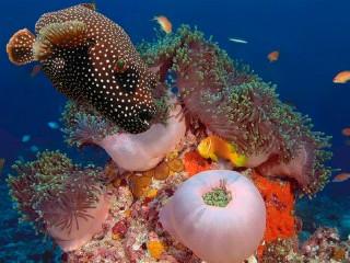 Собирать пазл Яркие красоты моря онлайн
