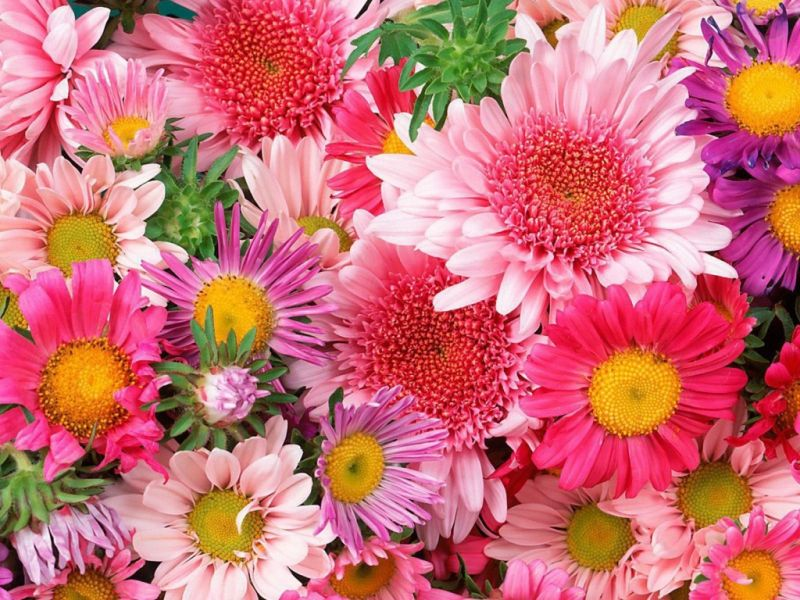 Пазл Собирать пазлы онлайн - Яркие цветочки