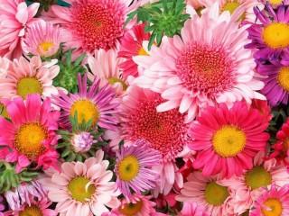 Собирать пазл Яркие цветочки онлайн