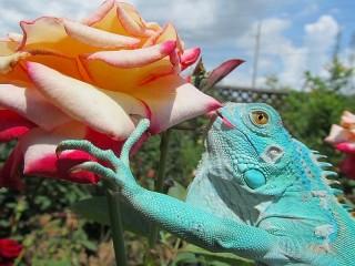 Собирать пазл Ящерица и роза онлайн