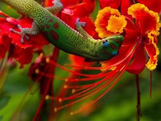 Собирать пазл Ящерица на цветке онлайн