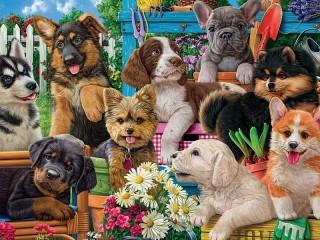 Собирать пазл Забавные щенки онлайн