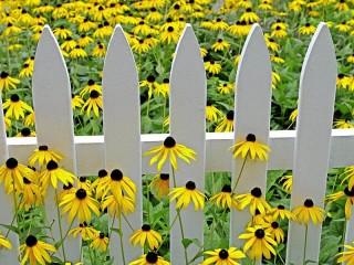 Собирать пазл Забор в цветах онлайн