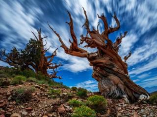 Собирать пазл Загадочное дерево онлайн