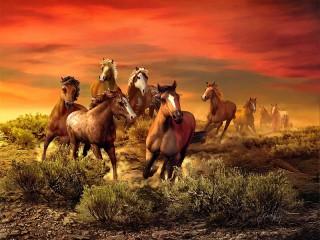 Собирать пазл Закат и лошади онлайн