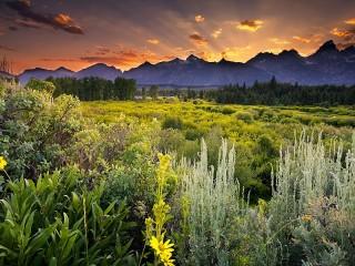 Собирать пазл Зеленая природа онлайн