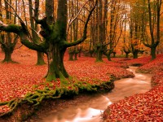 Собирать пазл Зелёные деревья онлайн