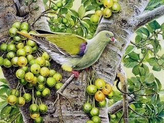Собирать пазл Зелёный голубь онлайн