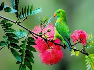 Собирать пазл Зелёный попугай онлайн
