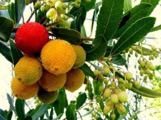Собирать пазл Земляничное дерево онлайн